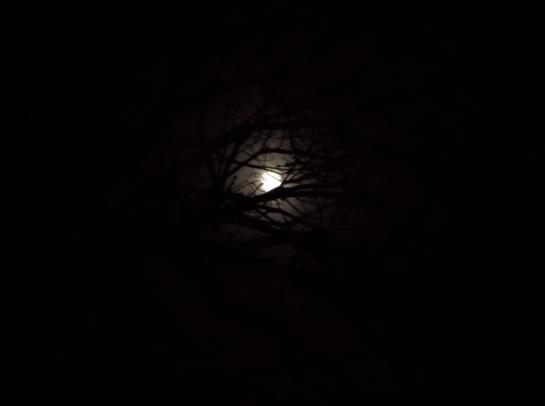 The darkest night is often the bridge to the brightest tomorrow. - Jonathan Lockwood Huie