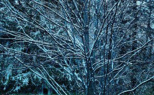 Snow In the Gloaming